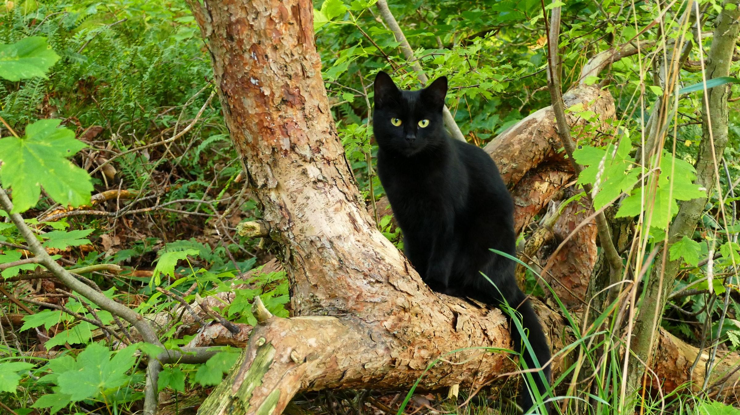 верить в приметы, черная кошка к неудаче, жизнь по приметам